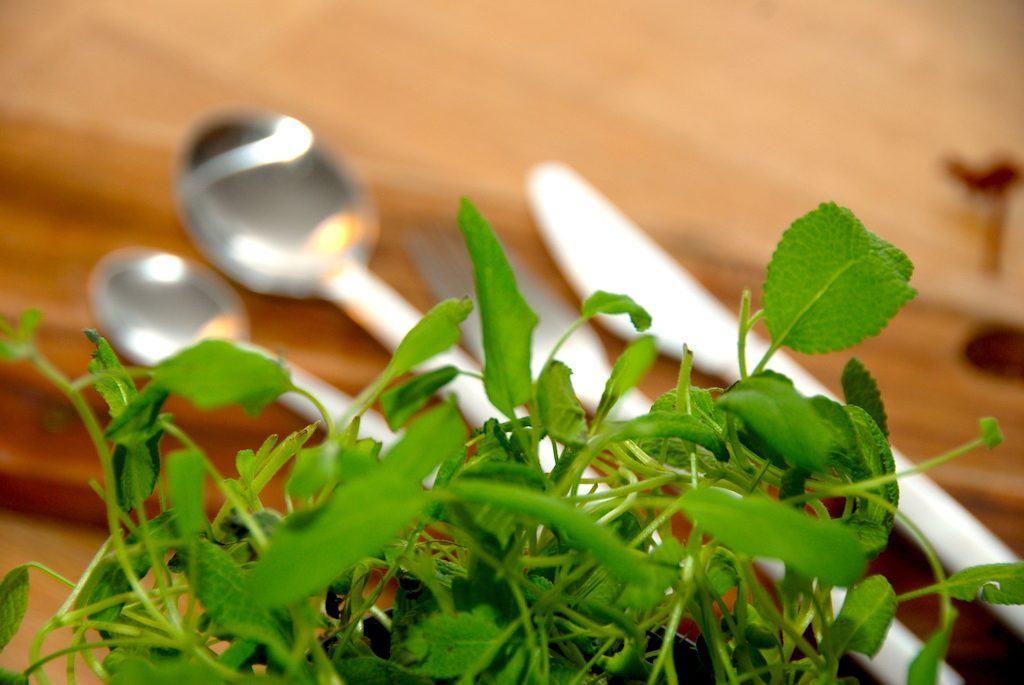 Rejesalat er en populær salat med rejer og blandt andet grønne asparges. Salaten kan varieres som man synes, men her er en god grundopskrift. Generefoto: Guffeliguf.dk.