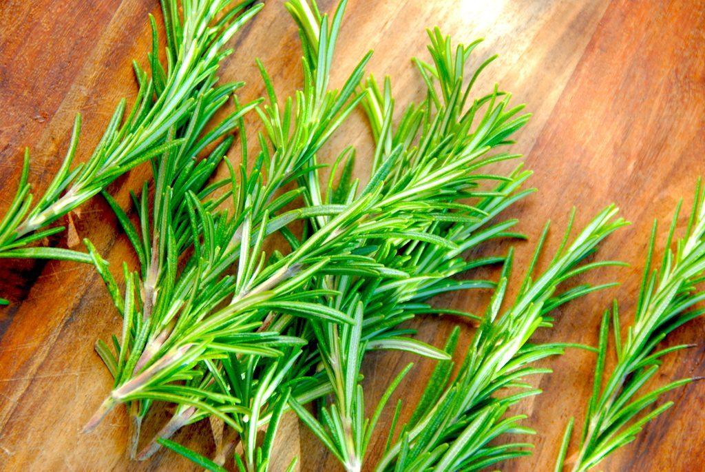 Rosmarin er en af de meget aromatiske krydderurter, der med dens karakteristiske smag er god til blandt andet kød og kartofler. Rosmarinen har også nogle sunde egenskaber, og så er den god at lægge på en tændt grill en sommeraften, hvor den vil tilføre en vidunderlig duft. Foto: Madensverden.dk.