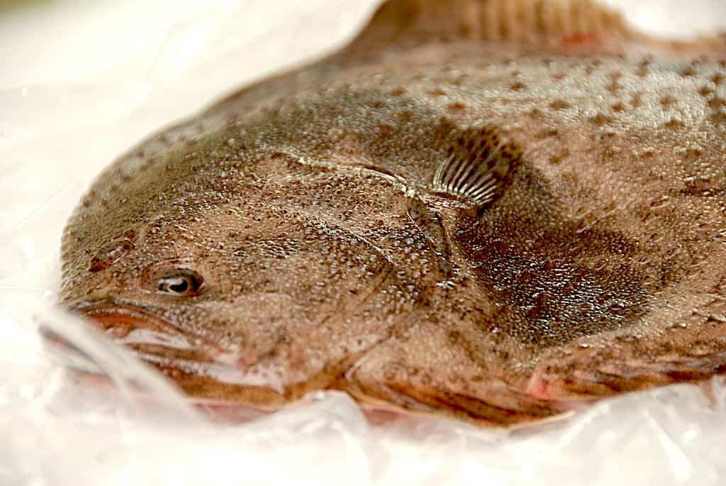 fisk kategori