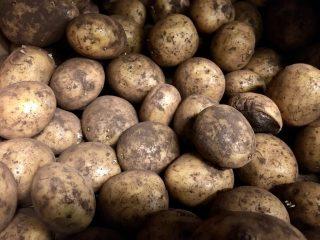 Kartofler er sunde for både krop og miljø, og så smager de fantastisk. Nu er der kommet en ny kalorielet kartoffel. Foto: Charlotte Mithril / Madensverden.dk