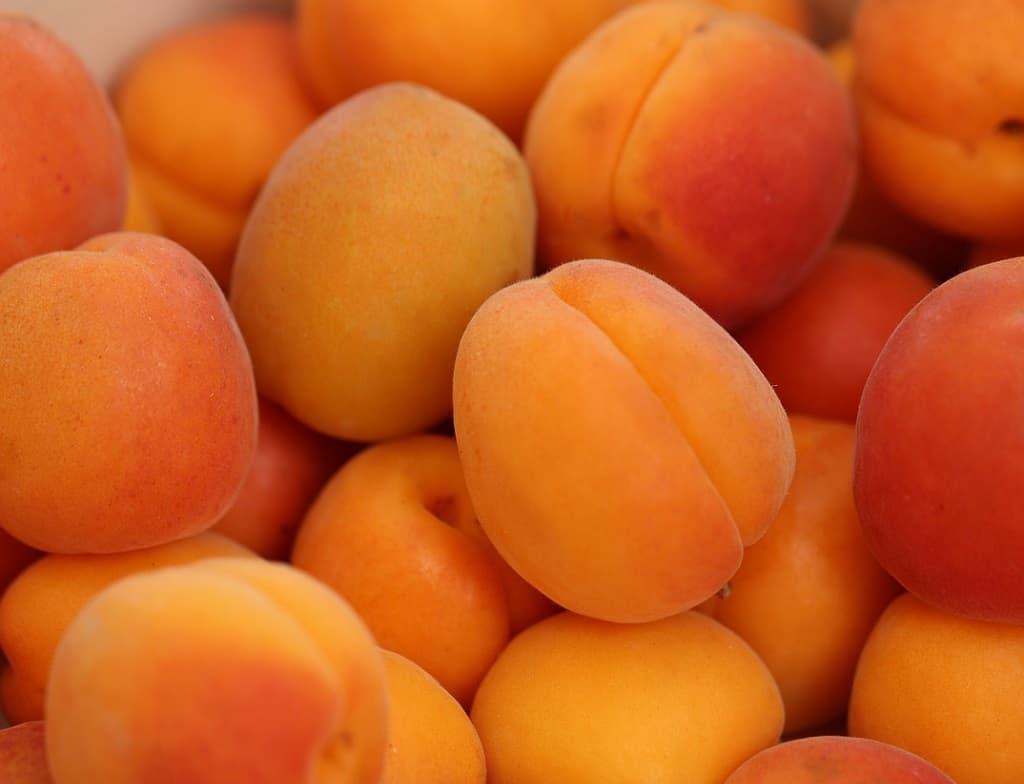 billederesultat for abrikoser