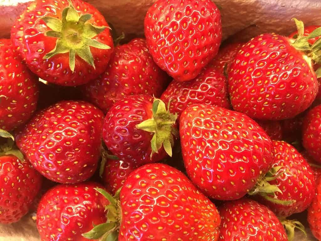Illustration. til artikel: Tips til jordbær