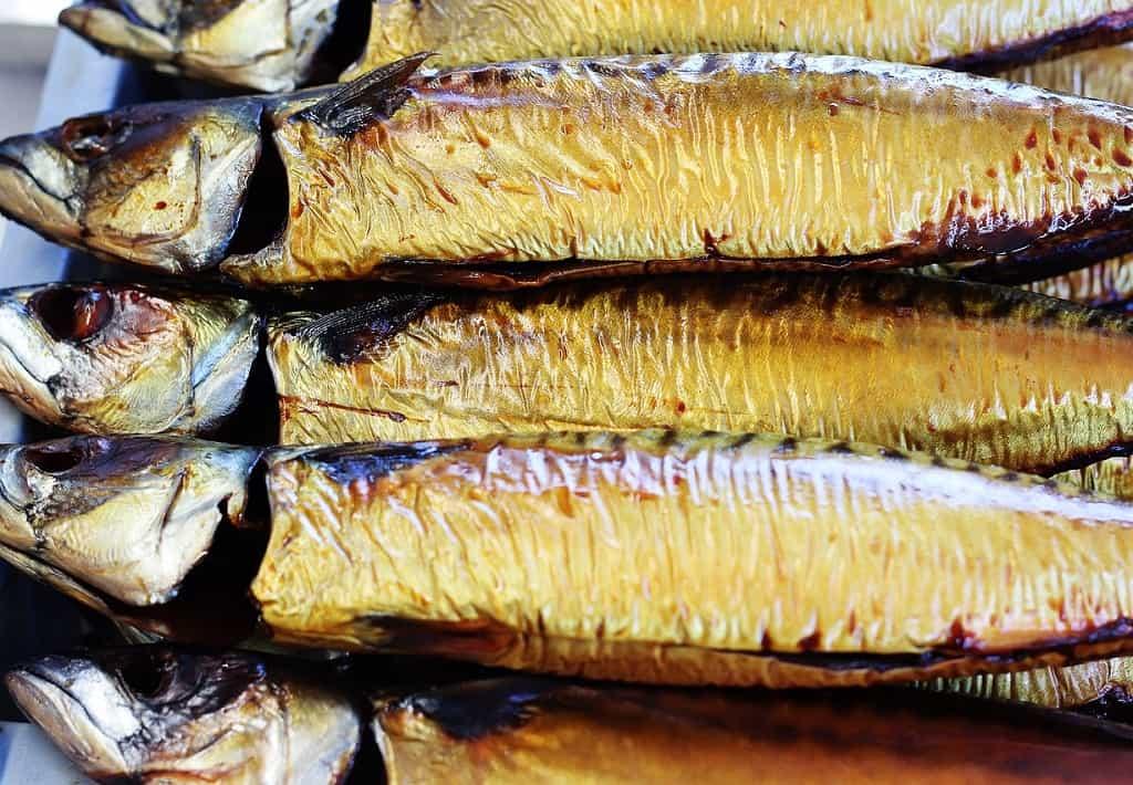 Makrel - røget