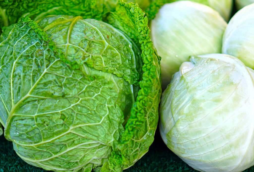 Kål, hvid og grøn
