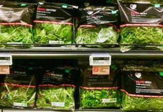 billederesultat for salat