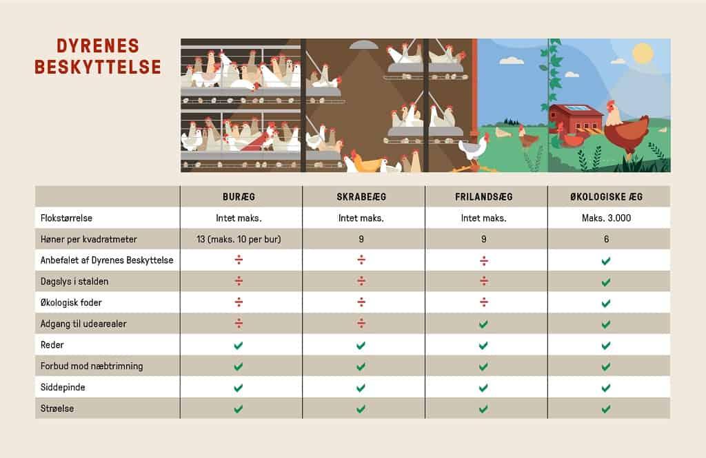 Skrabeæg og andre æg - oversigt