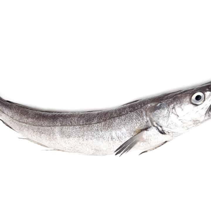 kulmule fisk fakta